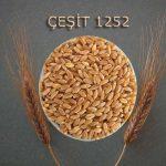 cesit1252